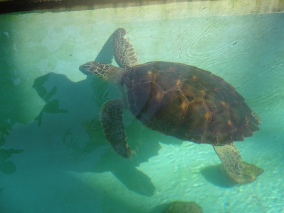 Projeto Tamar, which researches and rescues sea turtles