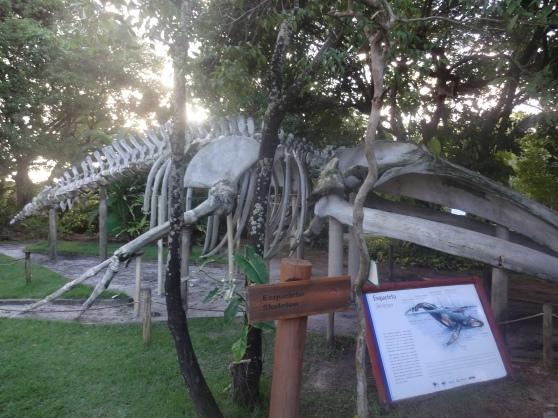 Wale skeleton at Projeto Baleia Jubarte (Humpback Wale)