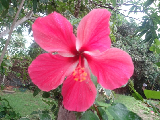Bright hibiscus flowers everywhere