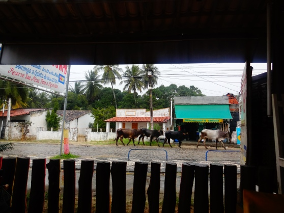 Of course there were vacas in the street....reminded me of my last summer spent in Nicaragua.